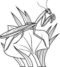 Small Picture Mantis Is A Type Of Green Bugs Coloring Page free Join my grown