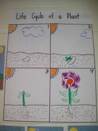 Life Cycle Of A Plant Lessons Tes Teach
