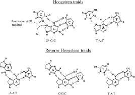 Higher Order Nucleic Acid Structures Springerlink