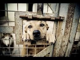 animal shelters sad. Plain Sad The Sad Truth Behind Animal Shelters Throughout YouTube