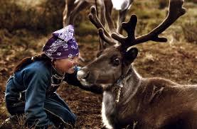 Reindeer Rescuer – Tufts Journal
