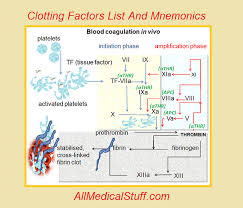 clotting factors list and mnemonics for easy learning