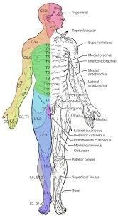 13 6 Testing The Spinal Nerves Sensory And Motor Exams