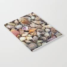 Seashell Collection From Florida Notebook By Cynthiabphoto