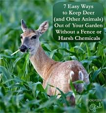 how to keep deer out of your garden. Ways To Keep Deer Out Of Your Garden Best Ideas About Fence On How