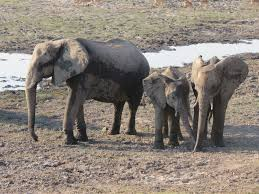 an african elephant photo essay   the world wandererelephant family