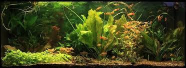 best aquarium filter types in 2021