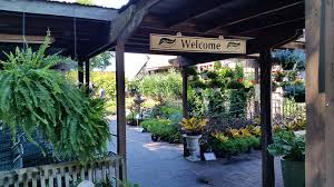 a wealth of plant material is used to furnish and decorate the main entrance of mcdonald garden center s virginia beach