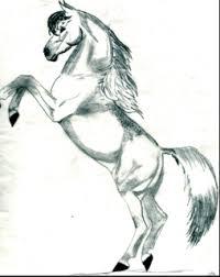 rearing horses drawings. Fine Rearing With Rearing Horses Drawings R