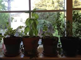 apartment herb garden. Apartment Herb Garden 5 Easy Steps To Gardening For Dwellers Travelnerd