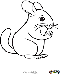 Small Picture Chinchilla Animal Coloring Pages Animal Small Animals Coloring