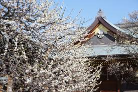 Bunkyo <b>Plum Blossom</b> Festival 2020 - Japan Web Magazine