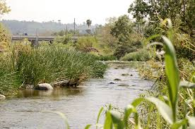 Riparian Isnt Just A Fancy Word For River Related Kcet