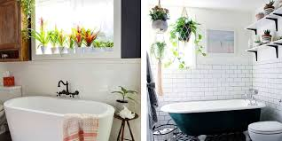Bathroom Plants Inspiration How To Hang Plants In Your Shower Plants In Bathroom