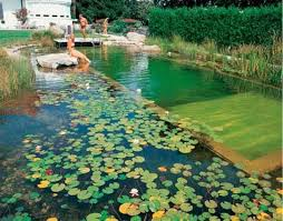 natural looking in ground pools. Plain Looking They Are Beautiful And Look Amazing All Year Around Changing With The  Seasons To Natural Looking In Ground Pools