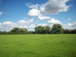 Grass Field Summers Green Grass Field Wallpapers C Nongzico