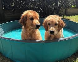 chien chats marrants piscine Images?q=tbn:ANd9GcQyk0l2Yw-ItLdZu-b9JEaRpwZqXMXUJZyLqMrWSGDWikT3D0RK