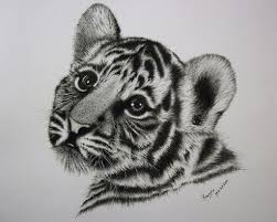 white tiger cubs drawing. Contemporary Drawing Baby Tiger Cub Drawing Throughout White Tiger Cubs Drawing T