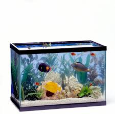 Fish In Small Tanks Are Shown To Be Much More Aggressive