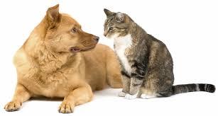 Γιατί τρώγονται σκύλος και γάτα;