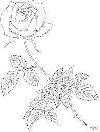 Disegni Di Rose Da Colorare Pagine Da Colorare Stampabili