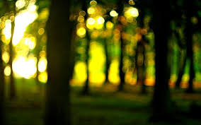 nature close up tree forest sun bokeh blur macro wallpaper widescreen full screen hd wallpapers background
