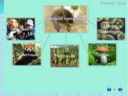 Урок окружающего мира по теме Экологическая безопасность й класс Назад