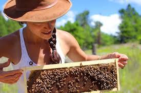 Αποτέλεσμα εικόνας για βελτίωση των γενικών συνθηκών παραγωγής και εμπορίας των προϊόντων της μελισσοκομίας