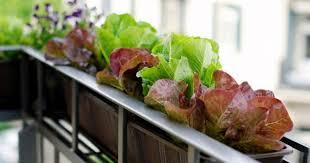 Balcony Garden Balcony Kitchen Gardening Ideas For Limited Space Blog