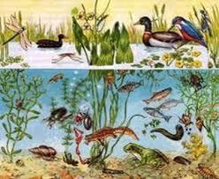 Природное сообщество водоема это совокупность различных живых  Любой природный водоем например озеро или пруд с его растительным и животным населением представляет собой отдельный биогеоценоз