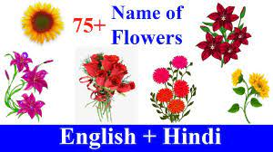 flowers name in english hindi