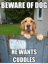 20 Best Dog Memes That Will Make You Laugh - Funny Dog Pictures ... via Relatably.com