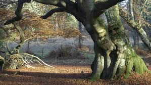 Resultado de imagen para lovers forest