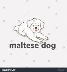 Dog Vector Design Maltense Dog Vector Design Elements Cartoons Royalty Free