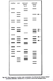 How To Read A Dna Fingerprint Chart Science Fair Project On Dna Fingerprinting