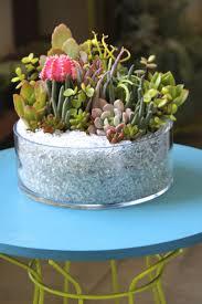 Succulent arrangement Succulent planter Succulent by DallaVita