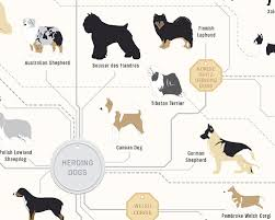 The Diagram Of Dogs A Dog Breed Infographic Poster By Pop