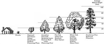 Oak Tree Size Chart Proper Tree Care Begins With Selecting The Right Tree And