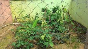 Kitchen Garden In India Healthy Garden Healthy Generation Fsl India Blog Fsl India Blog
