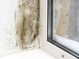 common areas for mold growth