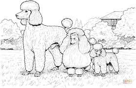 Small Picture Standard Miniature and Toy Poodles coloring page Free Printable