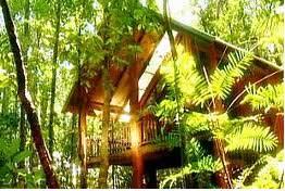 GGW Tarzali Green Hotels EcoFriendly Lodging  The Canopy The Canopy Treehouses