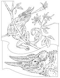 Small Picture National Geographic Coloring Pages Kids Coloring Free Kids