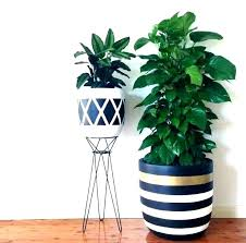indoor plant pots large flower tall decor uk pot best planters ideas on plants