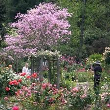 roses garden breathe in the perfume of this 5 acre garden devoted to most por flower