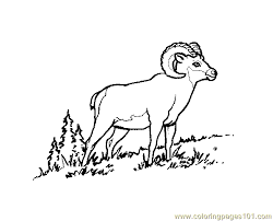 Small Picture Bighorn ram Coloring Page Free Ram Coloring Pages