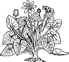 Small Picture Crafty Design Coloring Pages Trees Plants And Flowers 9 Fine