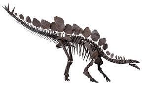 <b>Stegosaurus</b> - Wikipedia