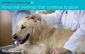 10 signs of cancer in dogs