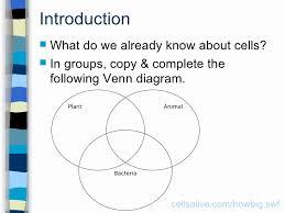 Plant Cells Vs Animal Cells Venn Diagram Plant And Animal Cell Venn Diagram Pdf Elegant Plant And Animal Cell